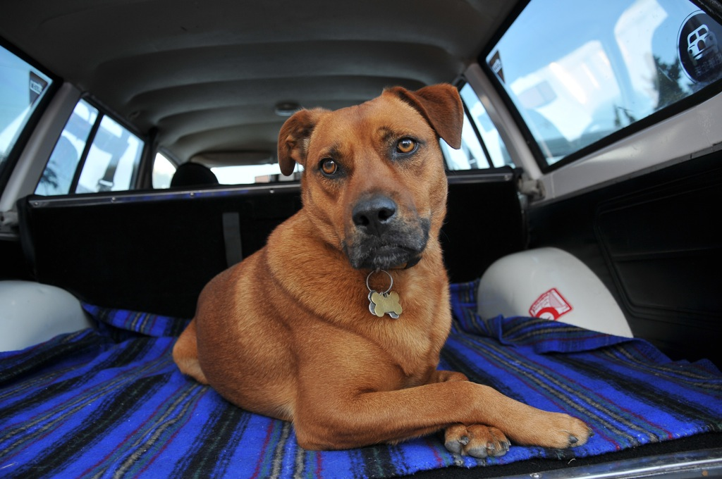 Goki's dog Dood rear 510 wagon