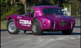 "The Winningest Competition Cobra in History ""DragonSnake"""
